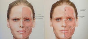 Bron: Radlanski, Ralf J, and Karl Wesker. The face: atlas of clinical anatomy. London: Quintessence, 2011.